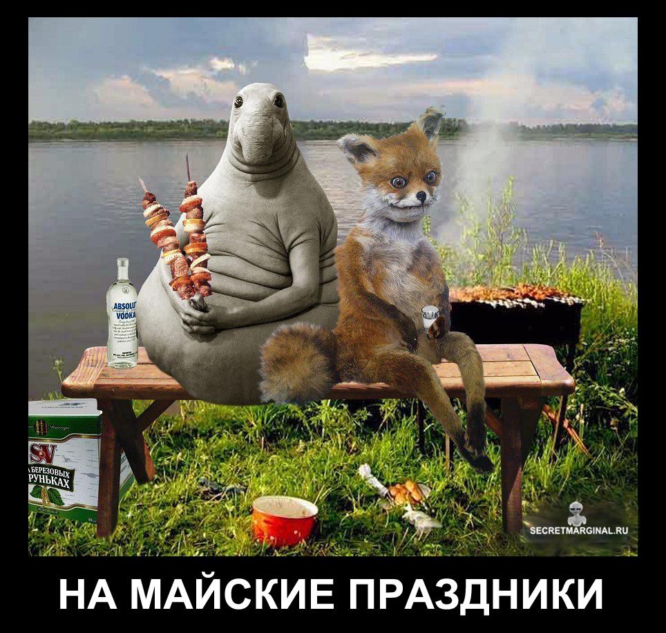 Приколы с животными