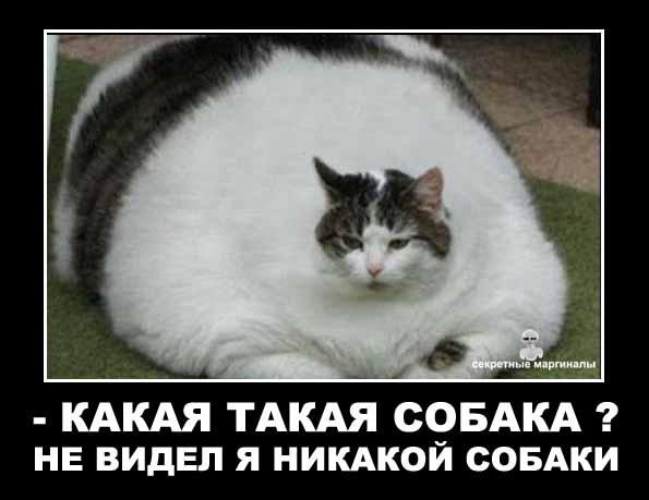 кот съел собаку