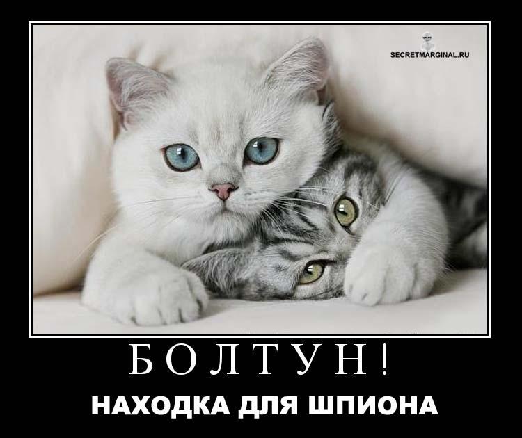 Кошки демотиваторы