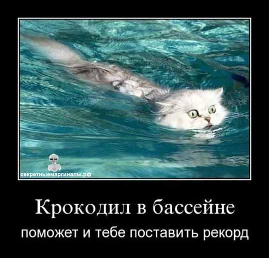 демотиватор про кота и крокодила
