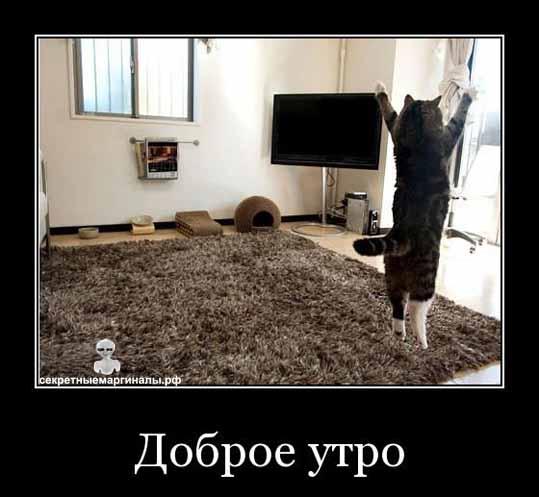 Доброе утро кот демотиватор