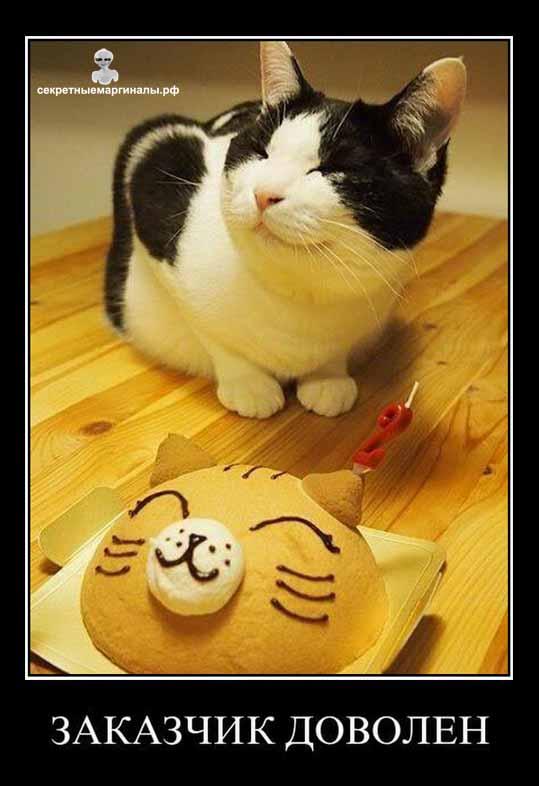 демотиватор довольный кот