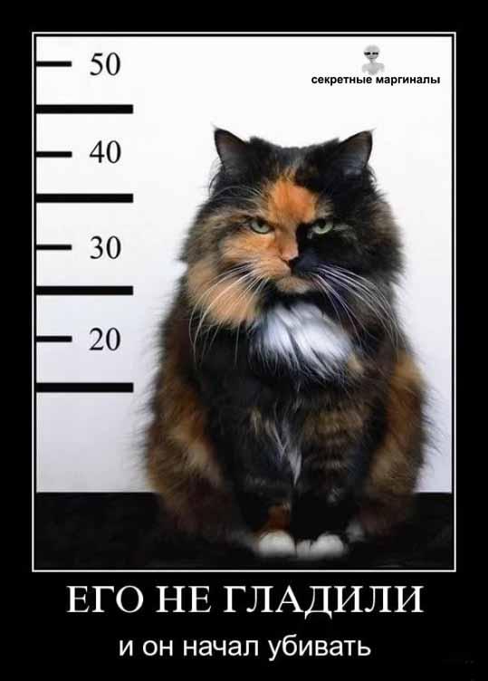 Кот убийца демотиватор