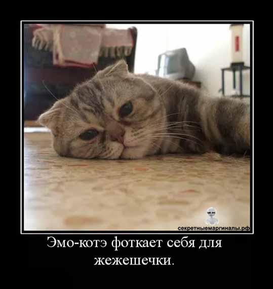 Коты демотиваторы эмо котэ