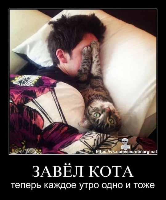 Коты  демотиватор  утро
