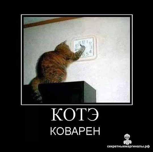 Кот коварен