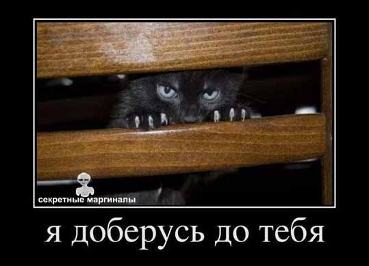 Я доберусь демотиватор кот