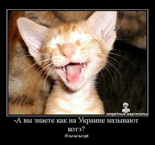 демотиватор кот кыця