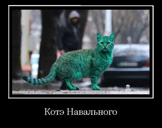 Навальный и его кот демотиватор