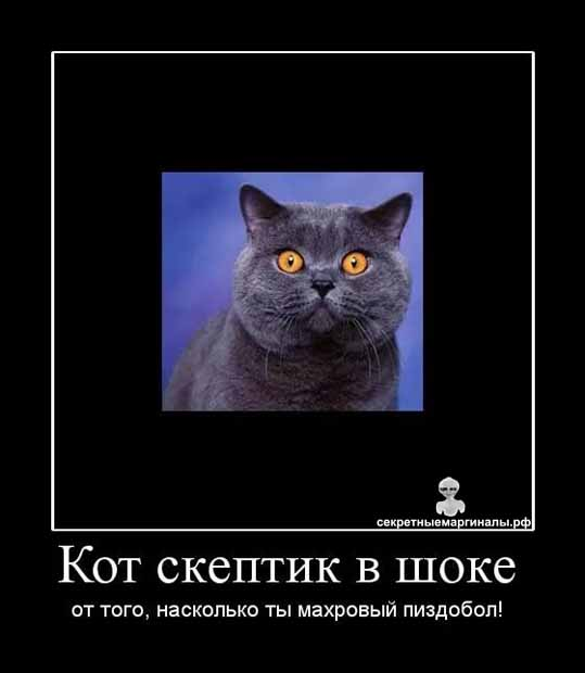 кот скептик демотиватор
