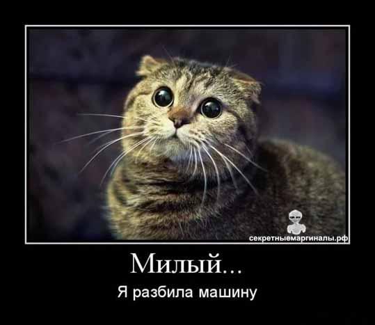 милый котэ демотиватор
