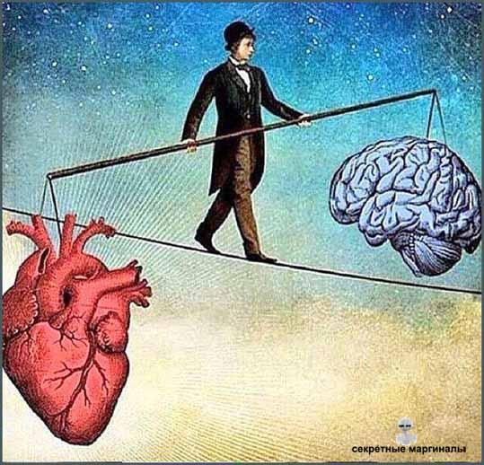 сердце или мозг