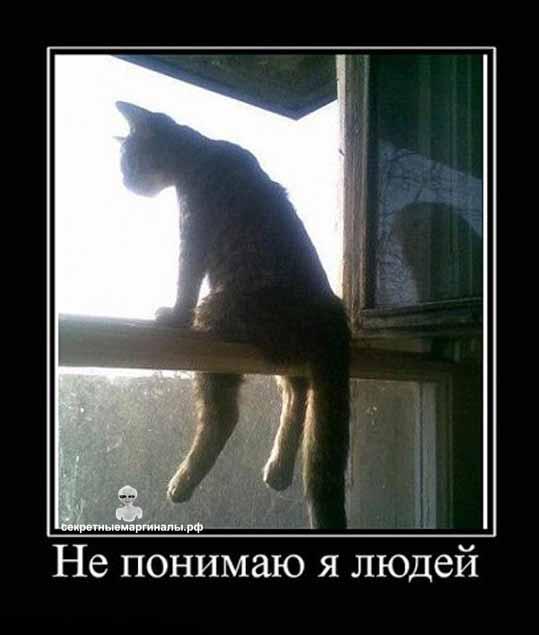 демотиватор про котэ в окне