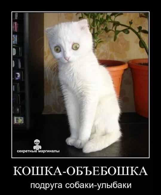кошка демотиватор