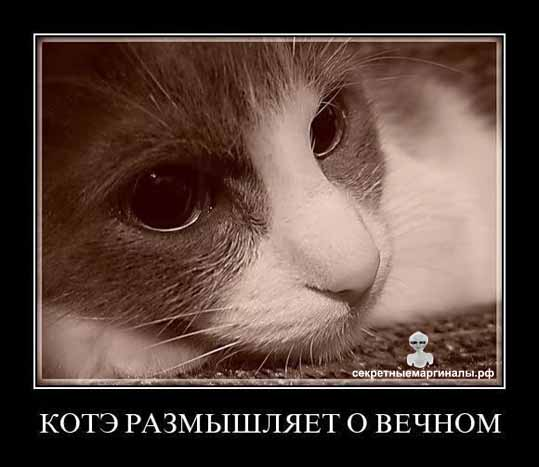 Демотиватор коты