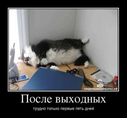 Юмор и приколы с котами и кошками