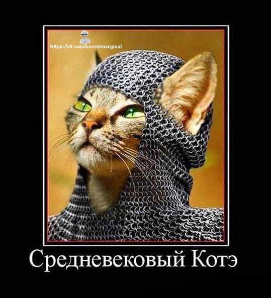 Средневековый кот демотиватор