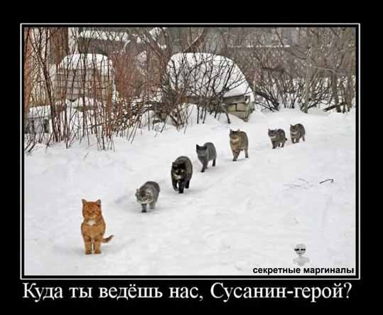 Котэ кошки демотиваторы