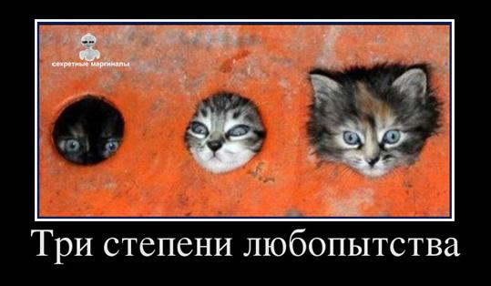 Котята три степени любопытства демотиватор