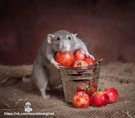 прикольная мышь