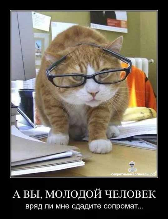 Демотиватор коты ученый