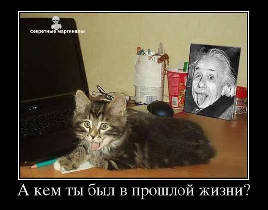 Кот Эйнштейна демотиватор