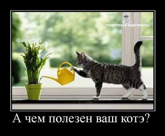 демотиватор  полезный кот