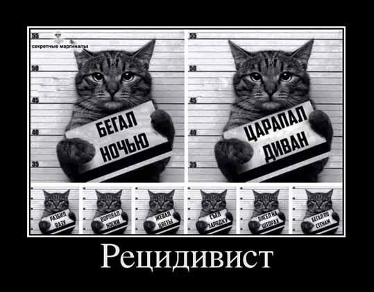 Демотиваторы про котов и кошек