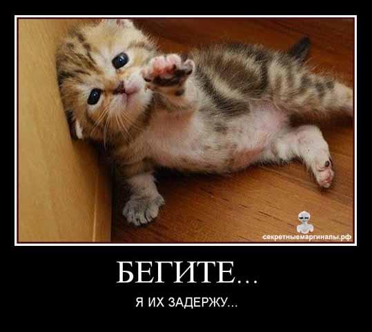 Демотиваторы кошки