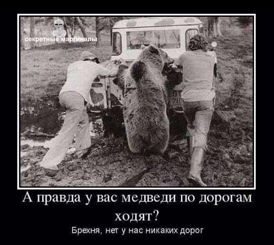 демотиватор медведи привед медвед дороги