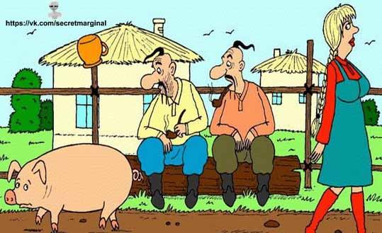 хохлы и свинья юмор