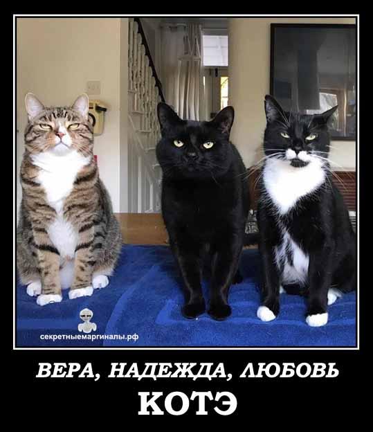 любовь котов демотиватор