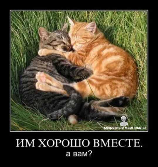 Демотиватор кошки вместе