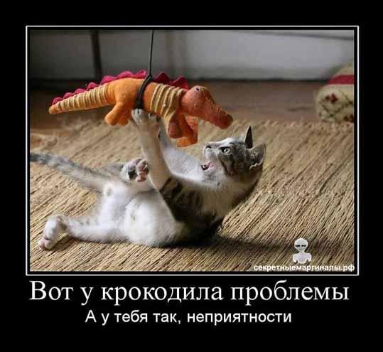 Демотиватор крокодил и кот