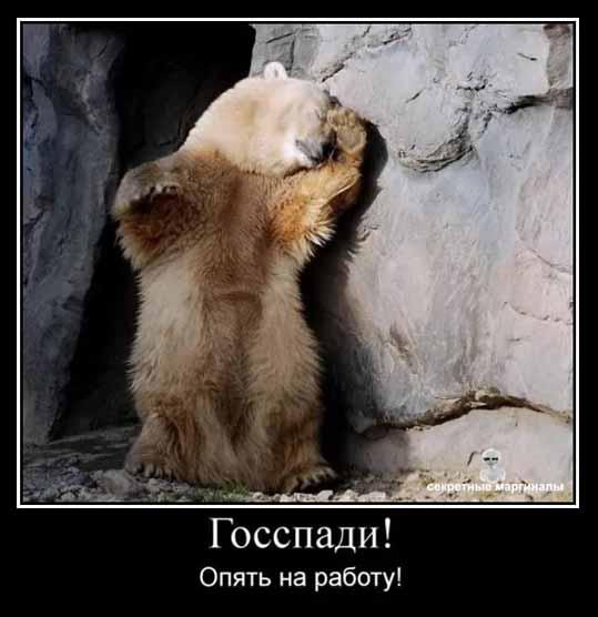 демотиватор медведи привед медвед госпади