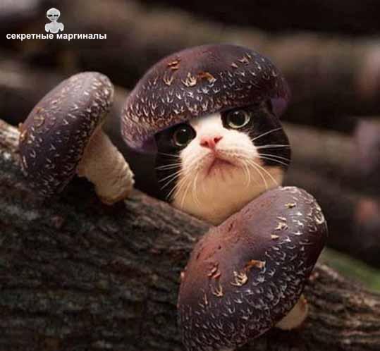 Кот гриб