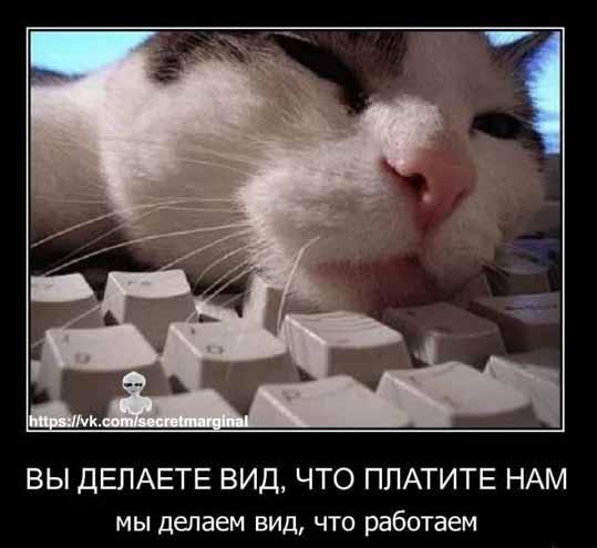 Демотиватор кот работа
