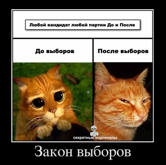 Демотиватор с котами