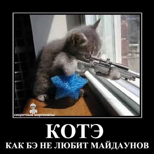 Демотиваторы про котов и майдан