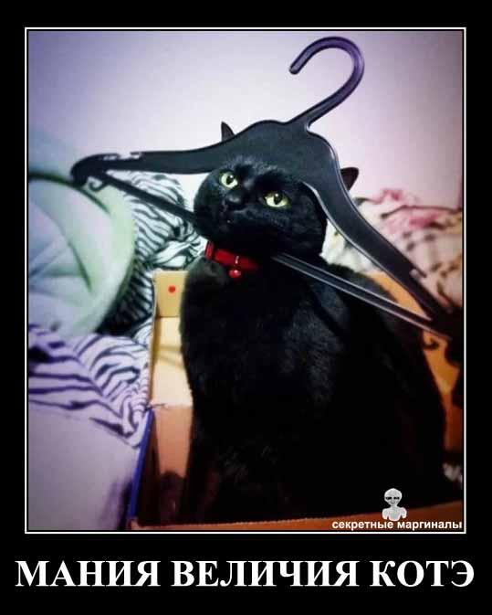 Демотиватор кот Наполеон