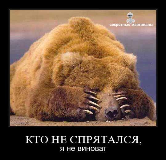 демотиватор медведи привед медвед прятки