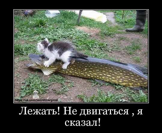 Кот и щука демотиватор