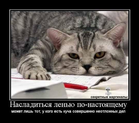Кот на работе демотиваторы