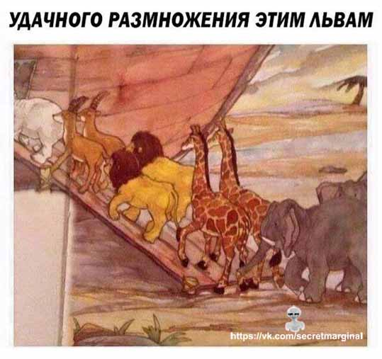 Ной библия юмор