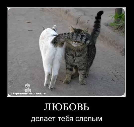 Коты Котэ любовь