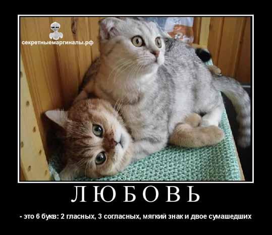 Любовь демотиватор коты