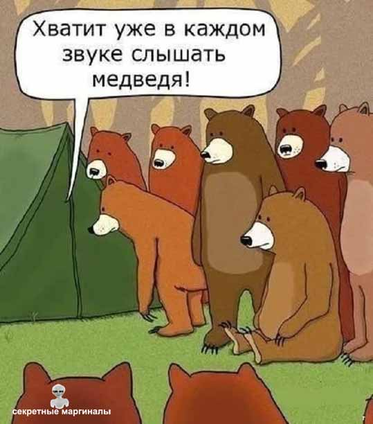 Медведи у палатки