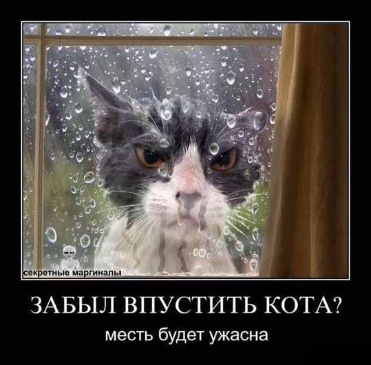 Коты демотиваторы котэ
