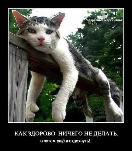 Лето демотиваторы с котами