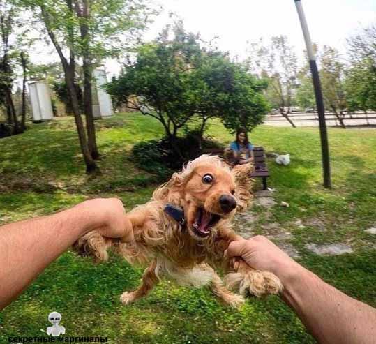 веселый щенок